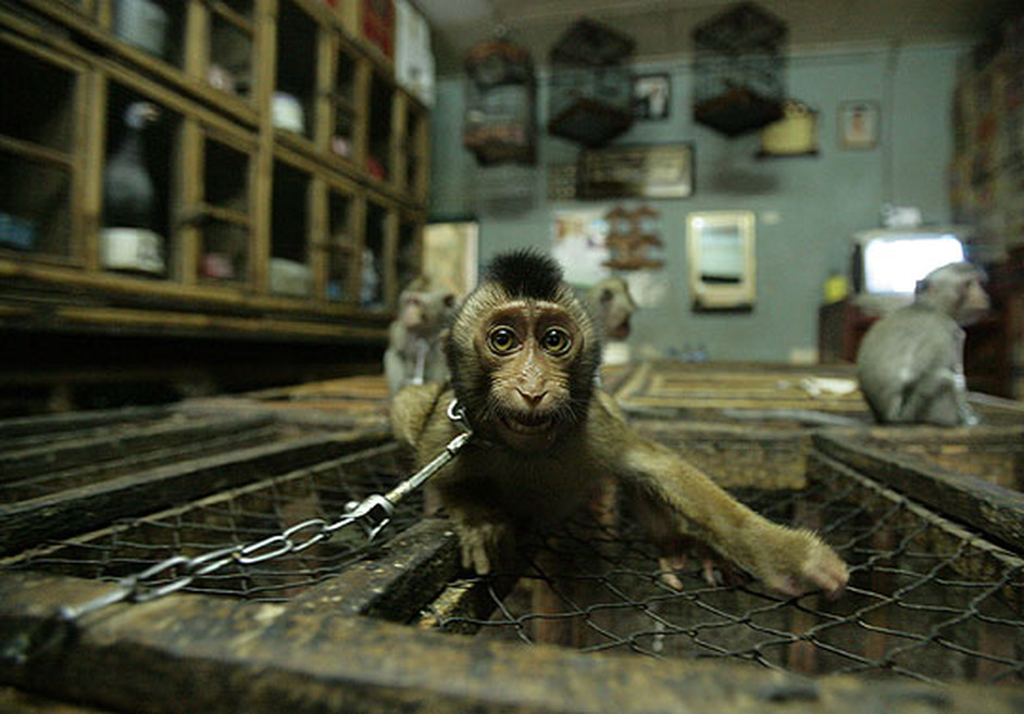 The Illegal Wildlife Trade - China - ESDAW