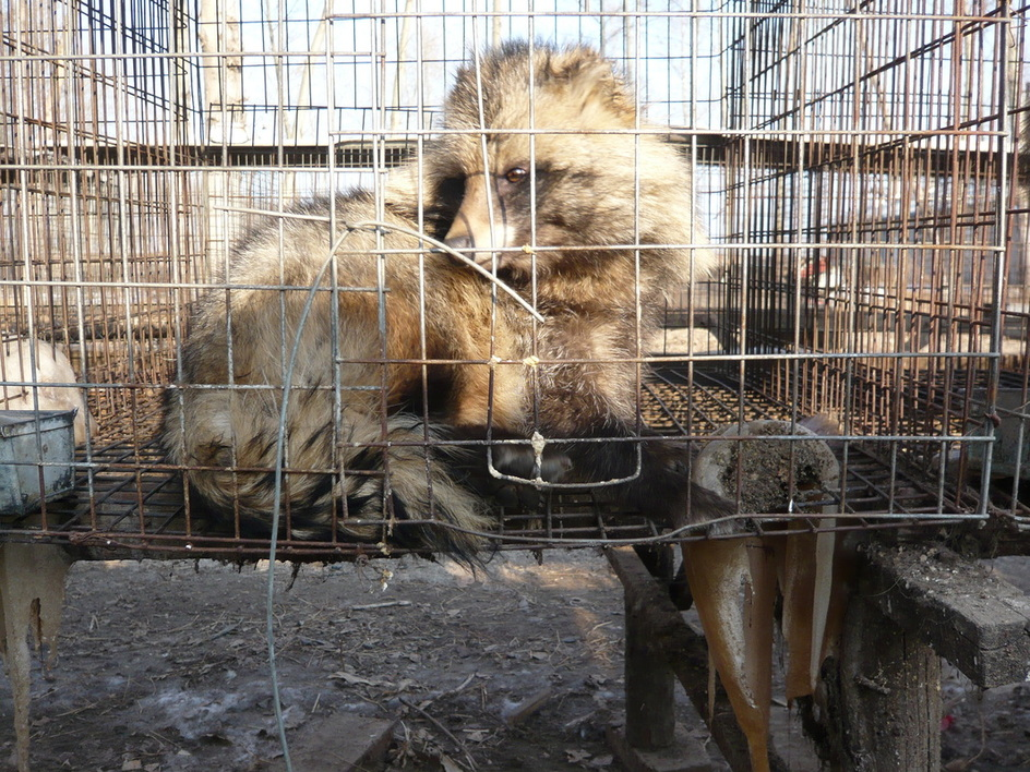 Horrific Fur Farm Conditions Ignored by Those with the Power to Stop It